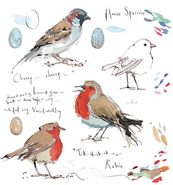 Madeleine Floyd - Sketchbook - Robin & House Sparrow