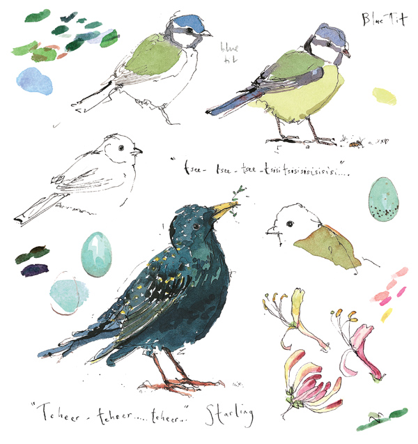 Madeleine Floyd - Sketchbook - Blue Tit and Starling