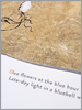 Jackie Morris Robert Macfarlane The Lost Words Limited Edition Prints