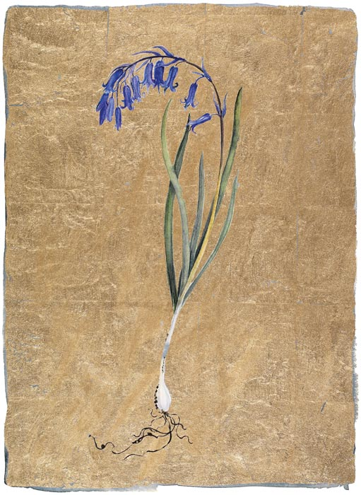 JM8030-The-Lost Words-Jackie-Morris-Bluebell-Signed-Limted-Edition-Print.