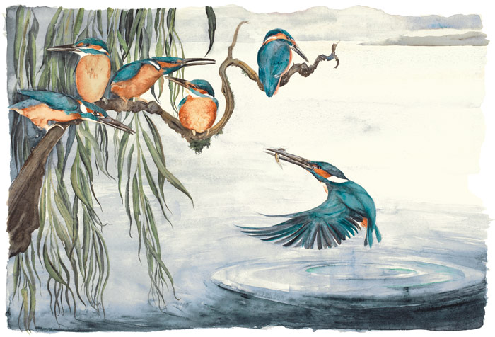 The Lost Words - Jackie Morris - Robert Macfarlane - Kingfishers - Signed Limited Edition Print